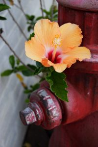 fire hydrant with flower